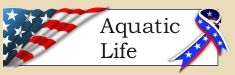 Graphic placeholder for Aquatic Life heading